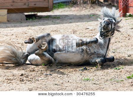 The small horse pony