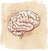 brain sketch & vintage background. Bitmap copy my vector