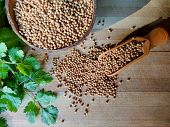 Coriander Seeds, Fresh Green Cilantro Leaves On Wooden Background. Coriander Seed In Bowl & Cilantro poster