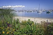 stock photo of cape-cod  - A garden view of a marina on Martha - JPG