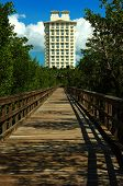 Hotel In The Mangrove Jungle, Bonita Springs, Florida, Usa
