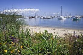 stock photo of cape-cod  - A garden view of a marina on Martha - JPG