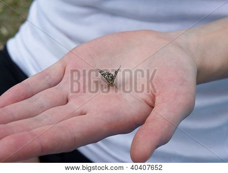 Butterfly on the palm