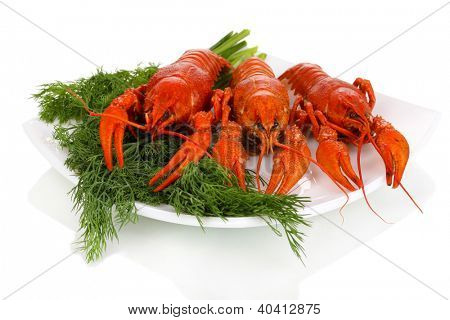 Tasty boiled crayfishes with fennel on plate isolated on white