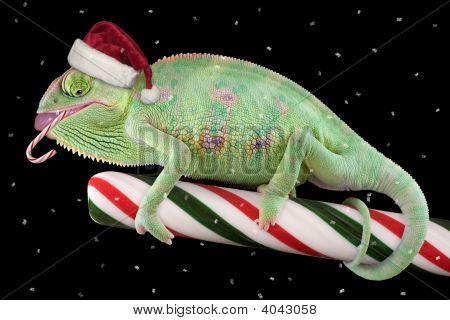Candy Cane Chameleon