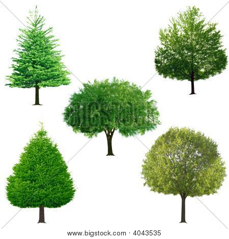 Baum-Auflistung