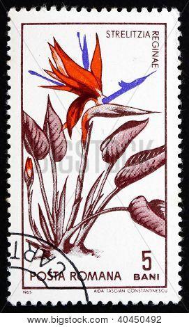 Postage stamp Romania 1965 Bird of Paradise Flower, Strelitzia