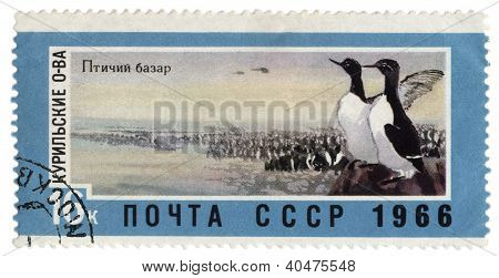 Rookery In The Kuril Islands On Post Stamp