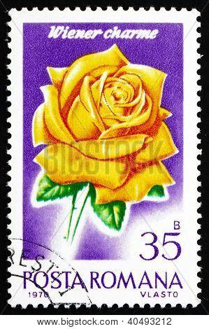 Postage stamp Romania 1970 Wiener Charme, Rose Cultivar