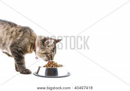cat eats cat food