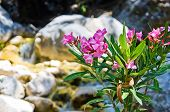 foto of samaria  - Beautifull flora is growing all around at Samaria gorge - JPG
