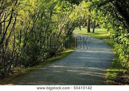 Walking path through the trees
