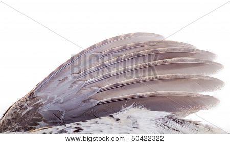 Plumage Of A Hazel Grouse