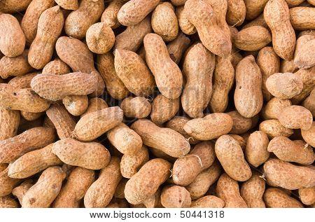 Peanut Or Groundnut