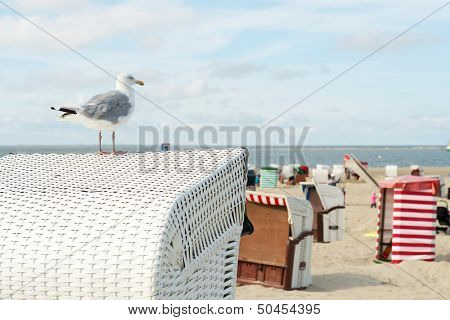 Sea gull on typical chairs at the beach of German wadden island Borkum