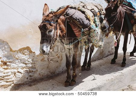 Donkeys on the street in Medina of Fes, Morocco
