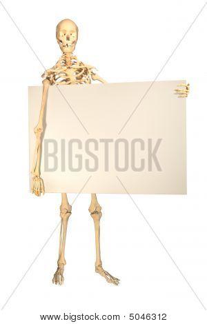 Esqueleto humano segurando cartaz em branco