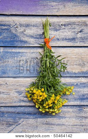 Medical Herb Common Tansy (tanacetum Vulgare) Flower Bunch