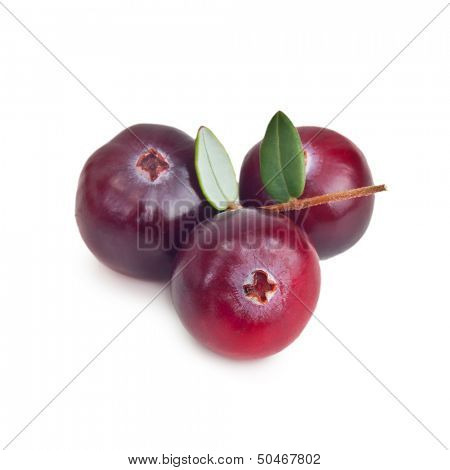 Forest berry cranberry with leaves isolated on white background.