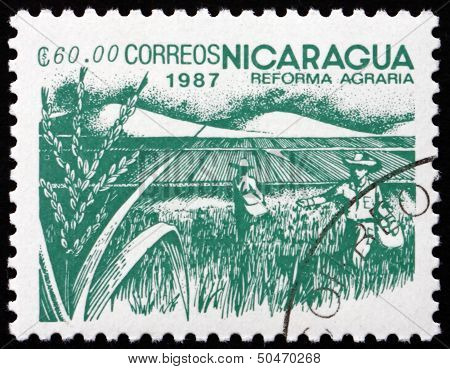 Postage Stamp Nicaragua 1987 Rice Paddy, Agrarian Reform