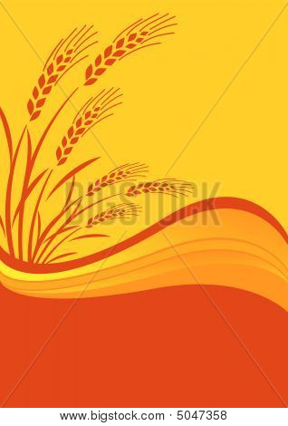 Background With Cereal Crop.