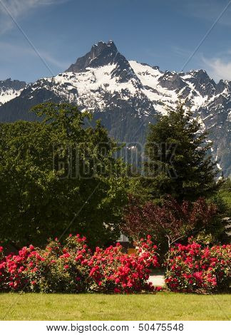 Whitehorse Mountain Rhododendrons Cascade Mountains Washington Vertical