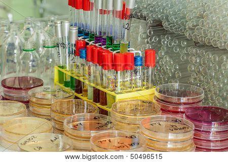 Agar Plates And Test Tubes