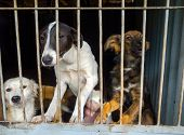 stock photo of stray dog  - Stray dogs in the shelter - JPG