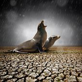 Two seals under heavy rain feeling relief after a severe drought