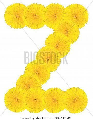 Letter Z Made From Dandelions