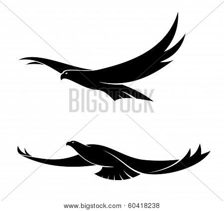 Two graceful flying birds
