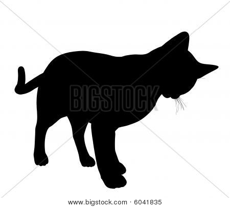 Cat Illustration Silhouette