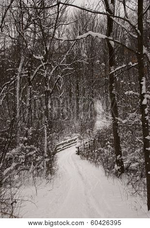 Snowy Path Alone