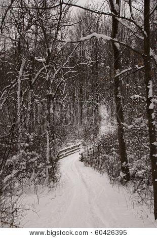 Snowy Path Alone