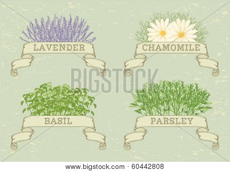 herbs isolated