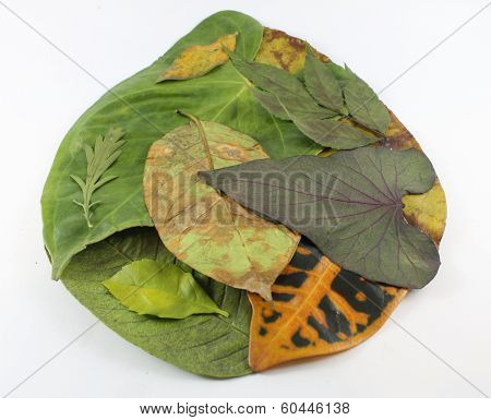 dried green leaves stock photo