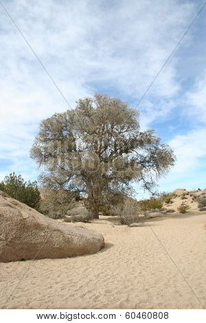 Dry Stream Bed Joshua Tree National Park California