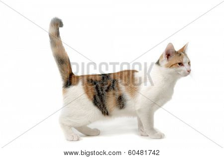 Cat is standing on a white background