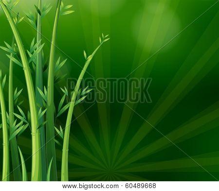 Illustration of the green plants