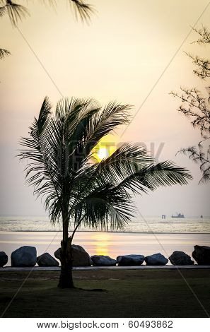 Sunset With Paltree