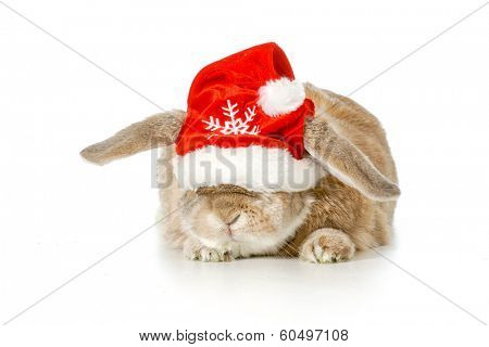 rabbit wearing santa hat isolated on white background