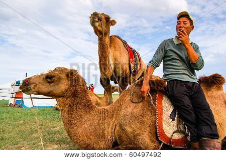 Cameleer and Camels In Mongolia