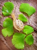 Little snail crawling on fresh green leaves, nature of the forest, slimy insect, spring time, small