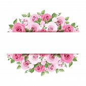pic of english rose  - Vector background with pink roses and leaves - JPG