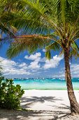 Tropical Beach With Beautiful Palm
