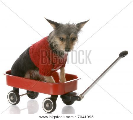 Puppy In A Wagon