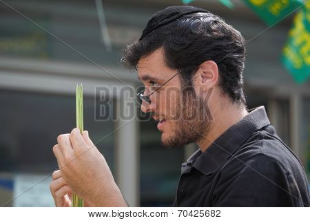 BNEI BRAK, ISRAEL- SEPTEMBER 22, 2010:  The young religious Jews in a skullcap are choosing ppalm at the basaar on the eve of Sukkotl. This was Sukkoth market