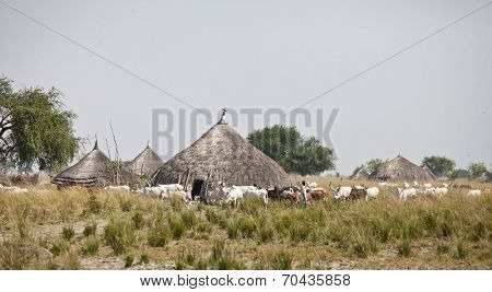 LILIIR, SOUTH SUDAN-DECEMBER 4 2010:Unidentified villagers herd their cattle through a village in South Sudan