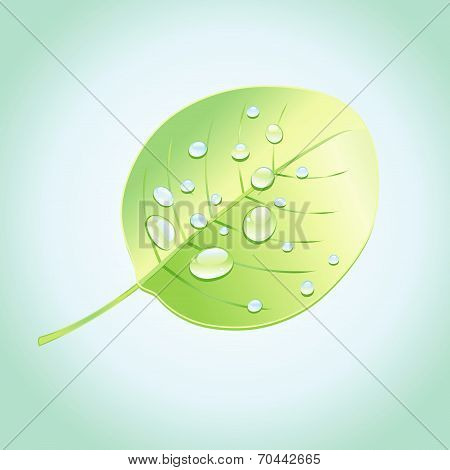 Wonderful Tree Leaf