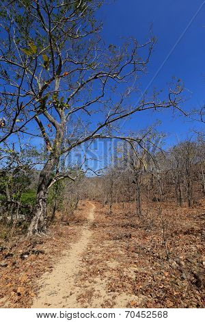 Dried trees in the drought forest inside drought empty Song Long Song ( River riverbed ) lake